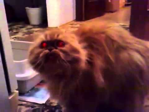 image of OLHA OLHA OLHA (demon cat)