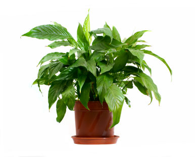 image of Houseplant Song - Audio A
