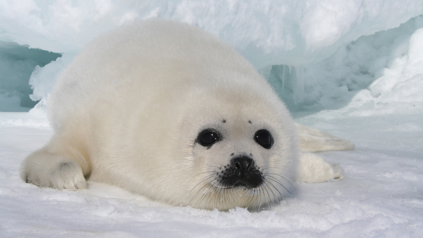 image of Seal *-*